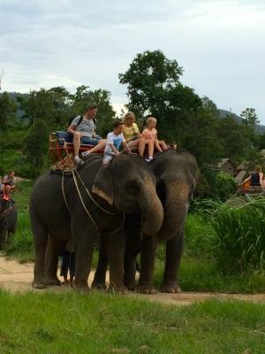 Elephant - Thailand